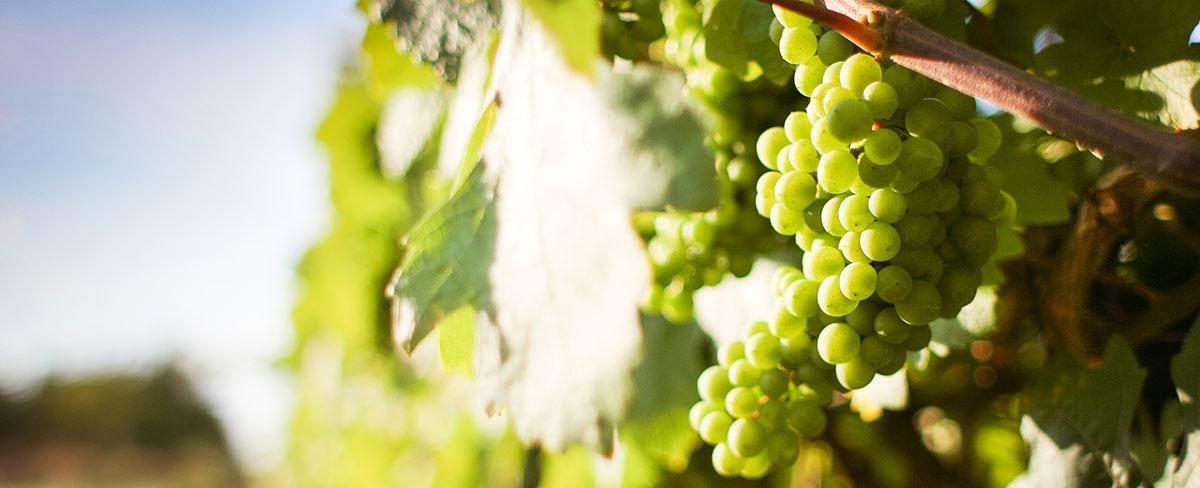 Winecru.it | vendita online vino Borgogna